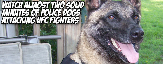 Watch almost two solid minutes of police dogs attacking UFC fighters