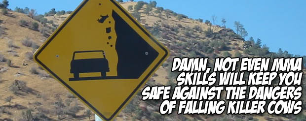 Damn, not even MMA skills will keep you safe from the dangers of falling killer cows