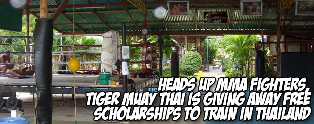 Heads up MMA fighters, Tiger Muay Thai is giving away FREE scholarships to train in Thailand