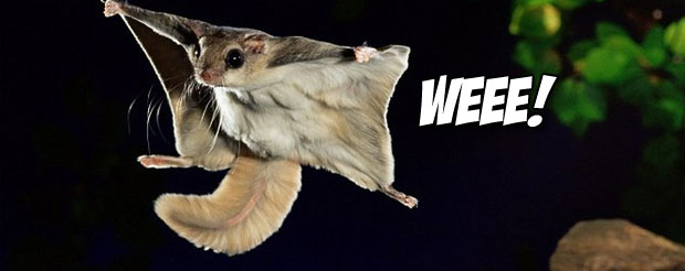 A New York wrestler won a national title with a 'flying squirrel' and here's the video