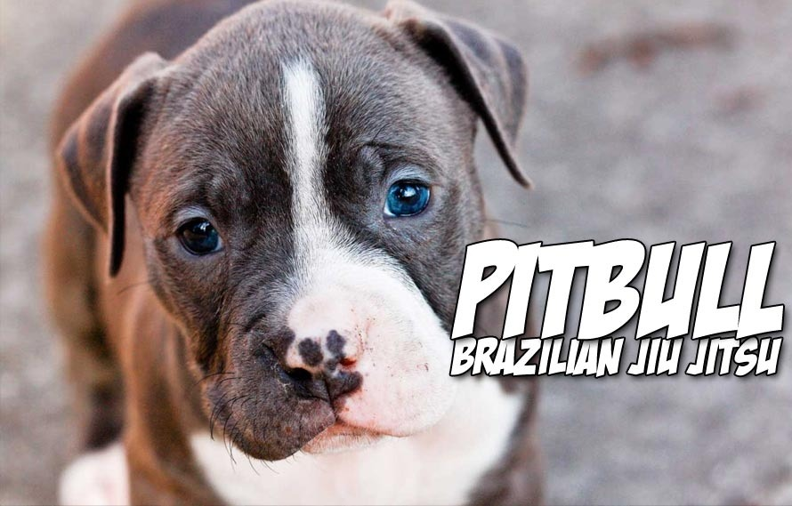 This guy demonstrates BJJ on an actual pitbull, and it's friggin' adorable