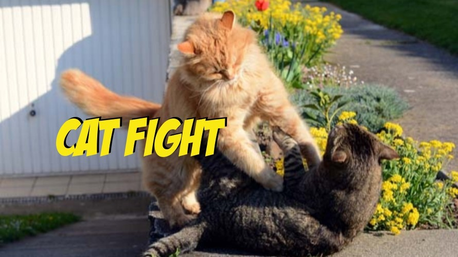 Street MMA: The Most Legitimate Fight Ever to Happen Inside a Woman's Bathroom